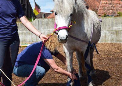 Steinhauser Akademie Ausbildung Therapiepferd Smirla zum sicheren Pferdepartner