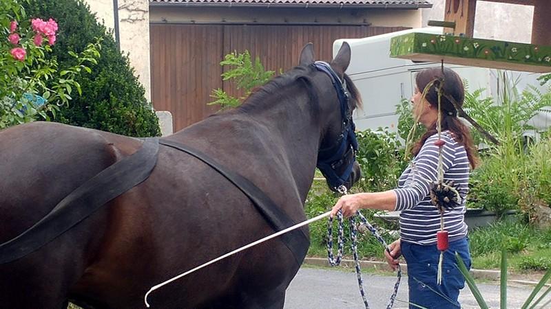 Bodenarbeit Modul Pferd 2